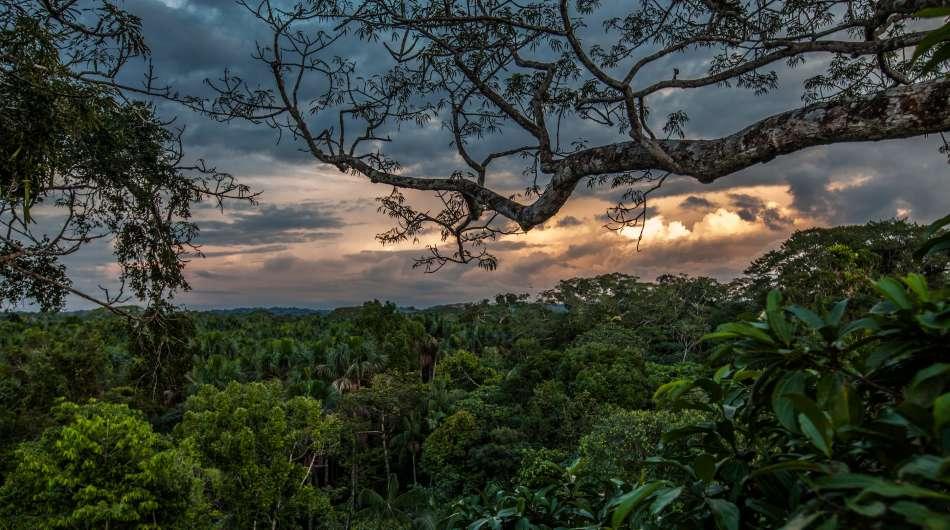 Anakonda Amazon Cruises   Dschungel am Rio Napo   © Advantage Travel Ecuador