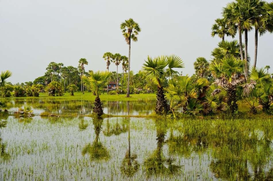 Aqua Expeditions | Reisfeld am Mekong in Vietnam | © Aqua Expeditions
