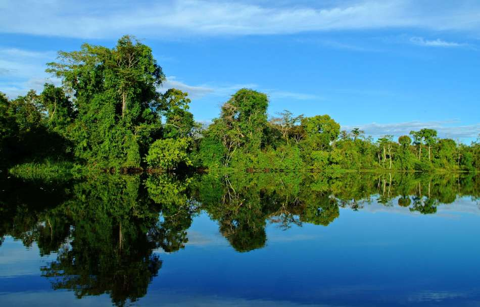 "MV ""Aria Amazon"" 